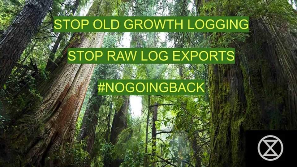 Old-Growth Forest Defenders Ramp It Up!